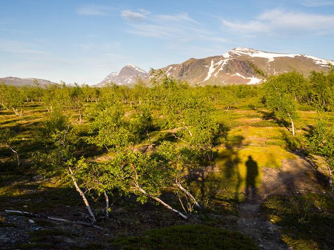 Koivikon kasvaessa ilmestyivät hyttyset, mutta hyttysverkko päässä ne eivät pääse rikkomaan tällaista rauhaa. Kisuris, Ruotsi