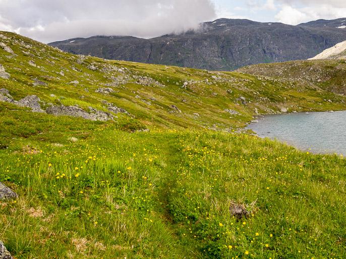 Kukkainen polku alaspäin. Caihnajavrrit, Norja