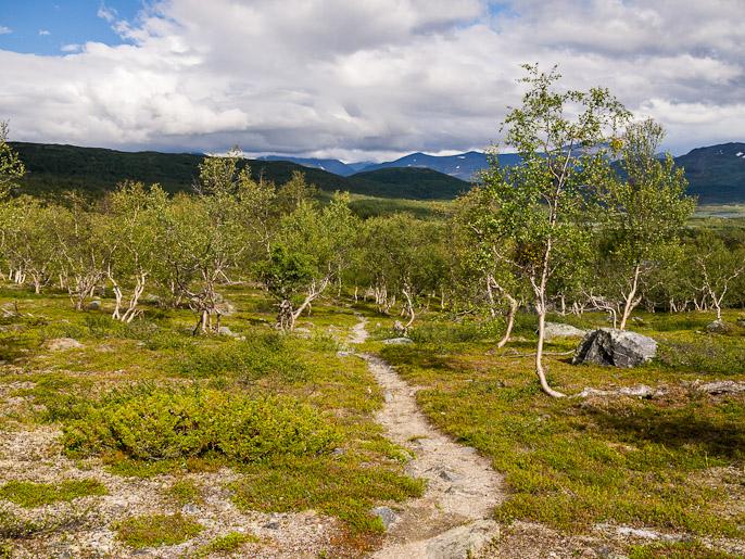 Suunta alas koivikkoon ja Abiskoon. Snarapjavri, Ruotsi