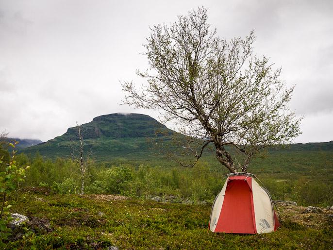 Telttailua puun alla, taustalla Kungsledenin kulkijoille tuttu Kartinvare. Hoiganjohka, Ruotsi