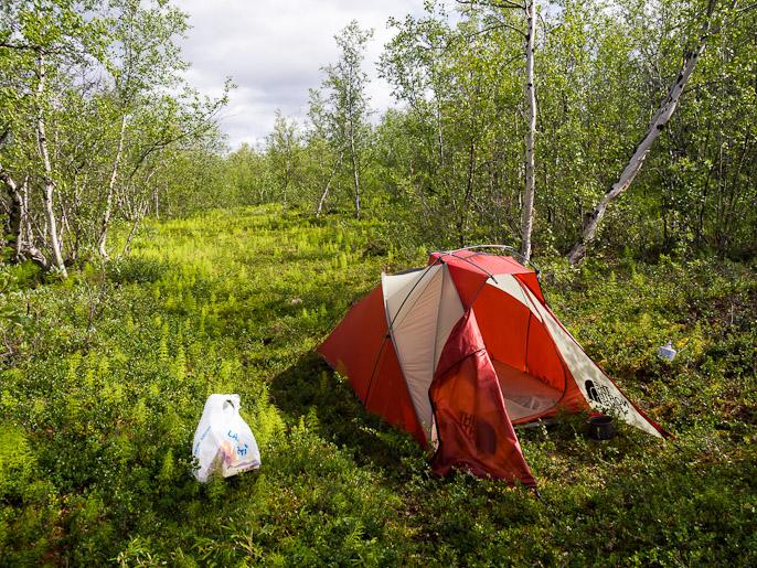 Leiri epäilyttävän lähellä kylää, koivikosta kukaan ei kuitenkaan löydä. Abisko, Ruotsi