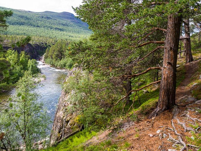 Divielvan uoma, sopiva paikka ruokatauolle tuossa edessä olevalla kalliojyrkänteellä. Dividalen, Norja