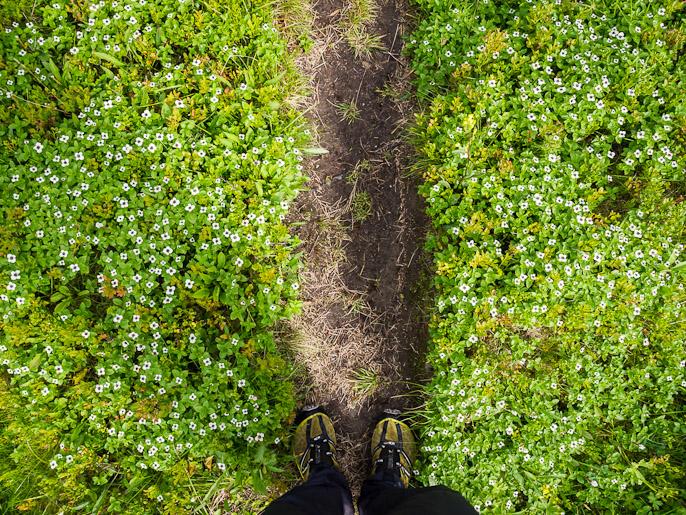 Heinäkuun lopun kukintoja polun ympärillä. Rostadalen, Norja