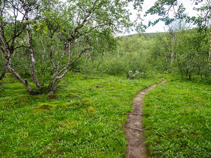 Duoibalin ylitys kohti kolmen valtakunnan rajapyykkiä alkaa etelärinteen koivikosta. Duoibal, Ruotsi