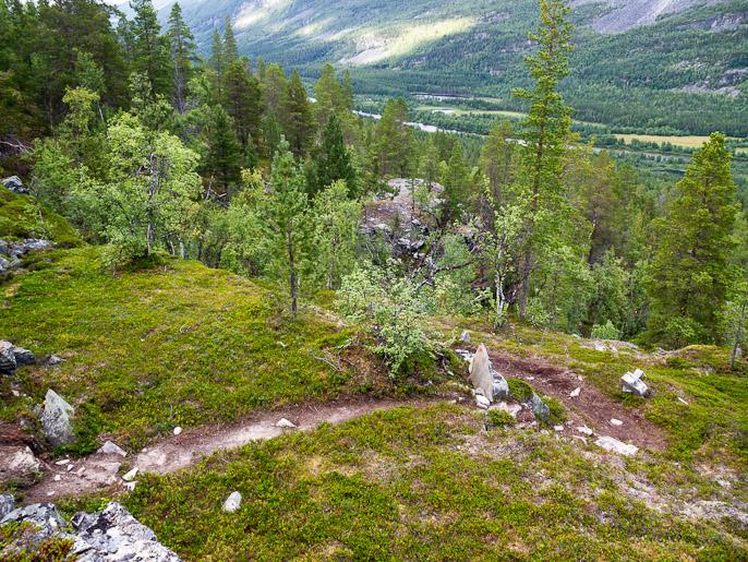 Sitten myös havupuita, jotka jälleen muistuttavat kotoisista metsistä kuten Övre Dividalissakin. Reisadalen, Norja
