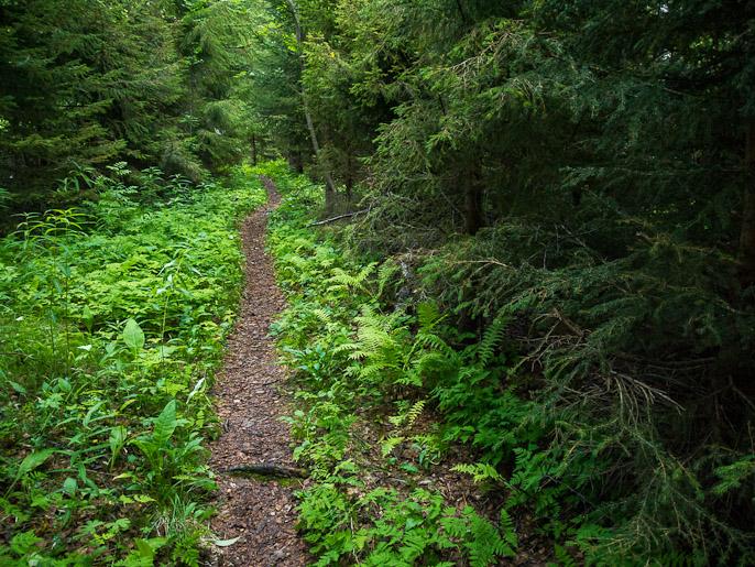 Yö hämärtyy täällä metsässä enemmän kuin avoimella maalla, mutta hämärä kuusikko oli erittäin kivaa vaihtelua, ja juuri maiseman vaihteluista pääsee nauttimaan pitkällä vaelluksella. Reisadalen, Norja