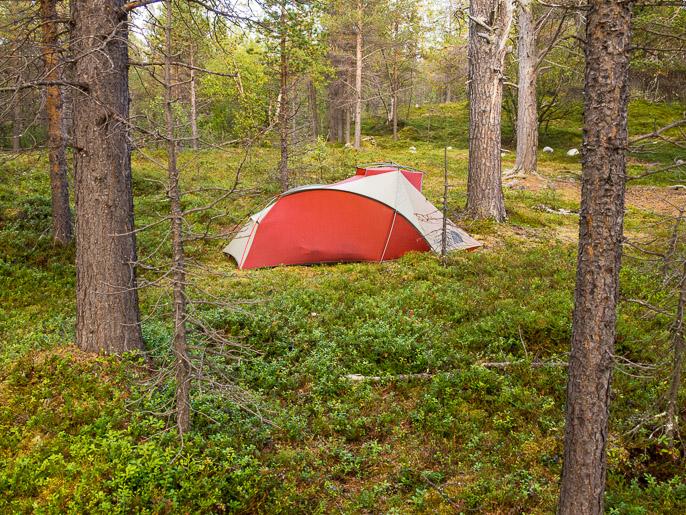 Kotoinen metsänpohja. Stabbursdalen, Norja