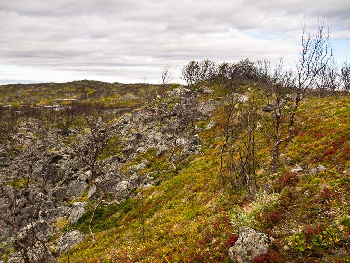 Täällä oli helpointa kulkea harjanteilla meneviä poropolkuja pitkin. Maskevarri/Rahppat, Norja