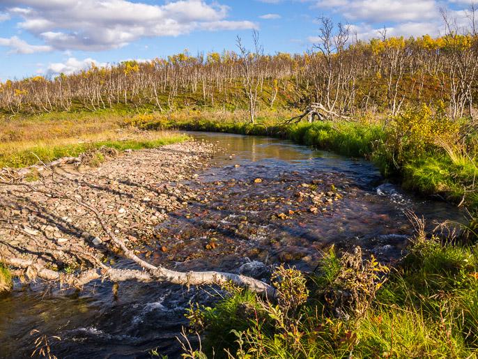 Kaatuneen puun runkoa pitkin puron yli, joka on varmasti vaarallisempaa tasapainoilua kuin kävellä vedessä. Alljaveaijohka, Norja