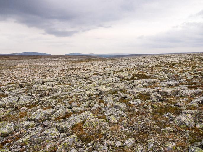 Kivikkoa Varangilla. Midtdalen, Norja