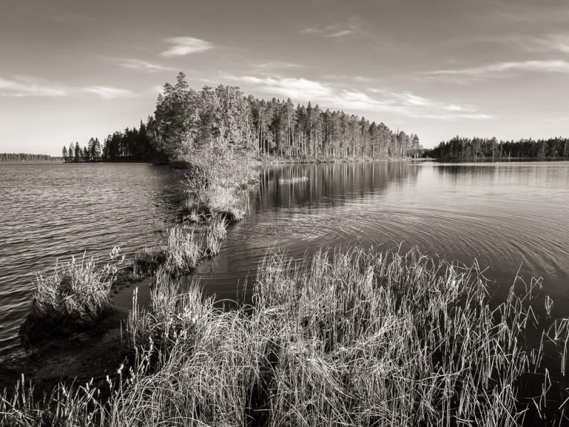 Suomunjärvi, Lieksa, 28.5.2013