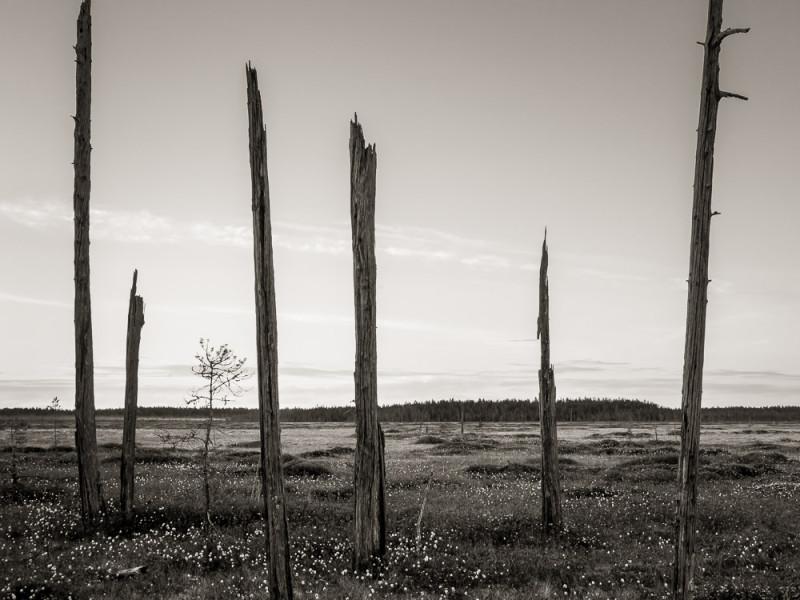Patvinsuo, Lieksa, 29.5.2013